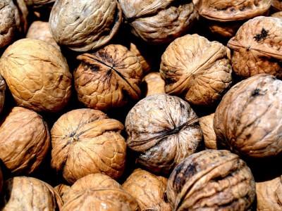 Способность капуцинов раскалывать грецкие орехи – высока