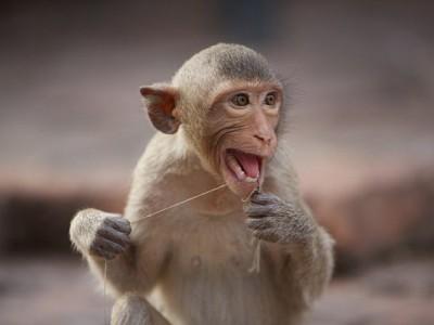 Нервирует обезьян — присутствие человека