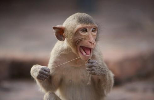 Что нервирует обезьян