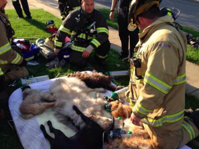 Спасти 16 собак и одну кошку удалось!