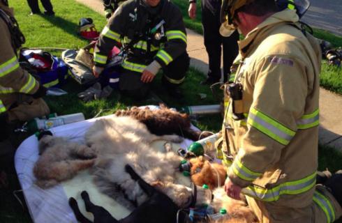 Кислородные маски спасли собак