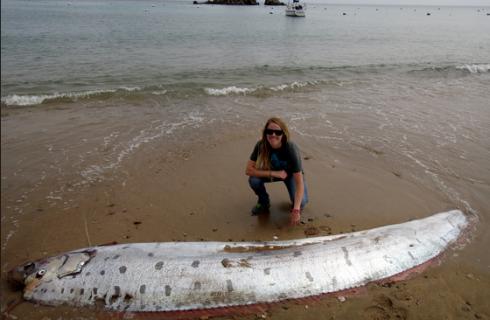Редкая рыба появилась на берегу