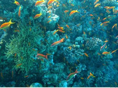 Окисление океана может повредить кораллам