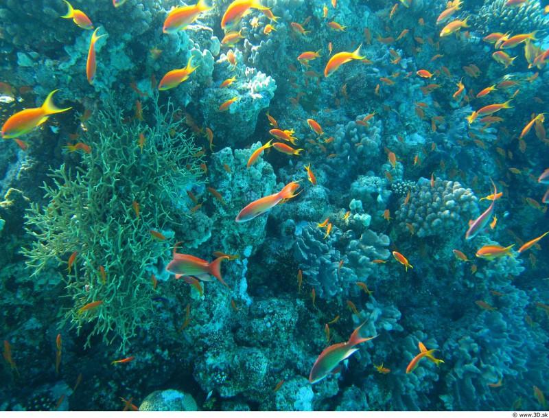 Окисление океана не вредит кораллам