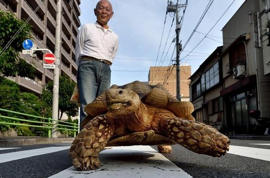 Гигантская черепаха замечена в Токио