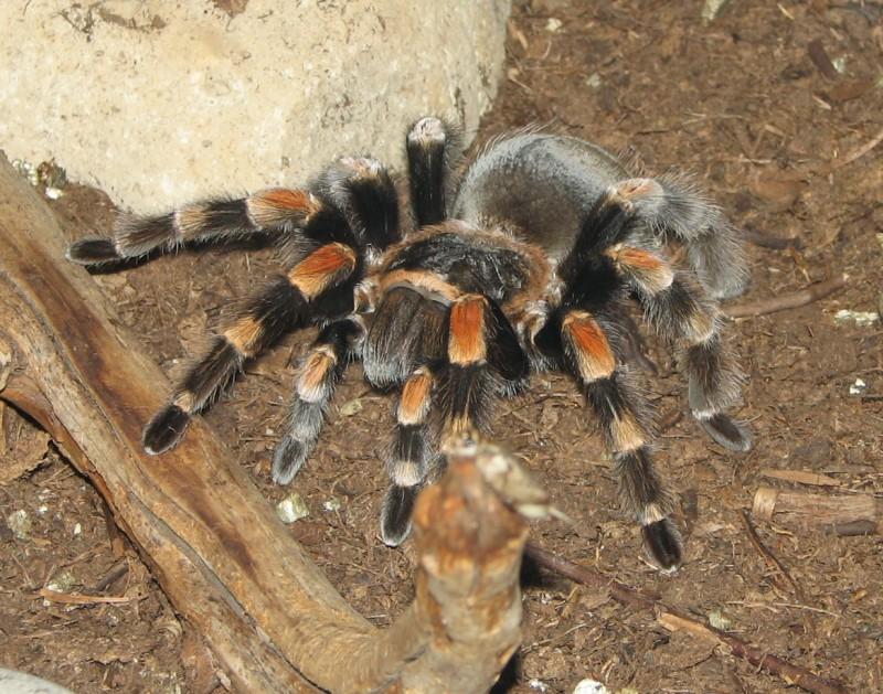 Австралию заполонили пауки