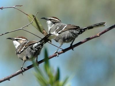 Песни птиц