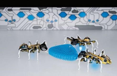 Роботы-муравьи могут работать в команде