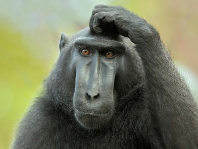 Мозг-компьютер  — новый эксперимент с обезьянами
