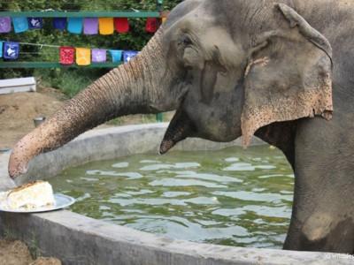 Слон Раджу и его праздничный пирог