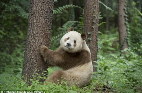 Панда показала, что нельзя делить все на черное и белое