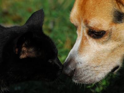 Животные для аллергиков