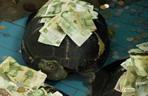 Туристы украшают черепах