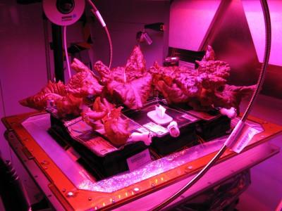 Овощи в космосе: проект по выращиванию овощей на МКС