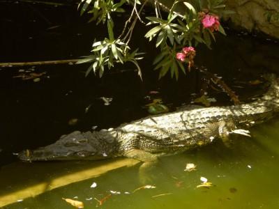 Пение крокодилов. Фотограф Екатерина Пастухова