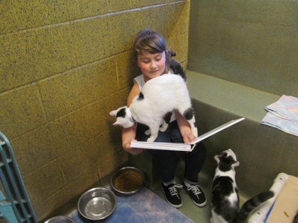 Чтение сближает кошек и детей