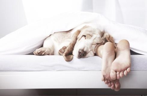Ученые определили оптимальную температуру воздуха для сна
