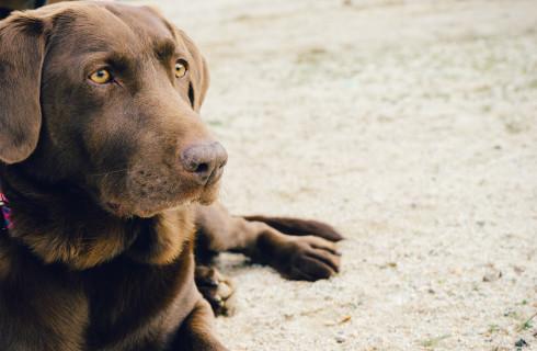 Ученые определили лучших животных-лекарей