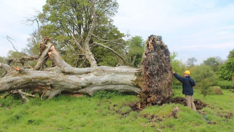 Что можно найти в корнях дерева