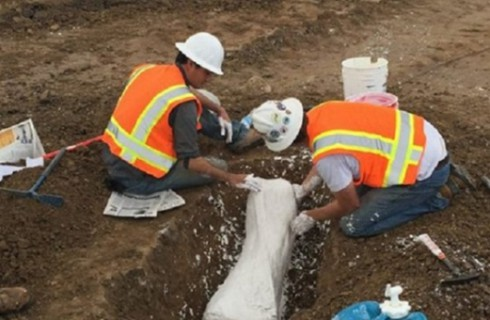 Строители превращаются в палеонтологов