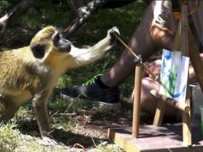 Рисунки животных . Рисующая обезьянка из зоопарка Окленда