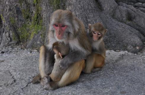 Первыми на Марсе будут жить обезьяны