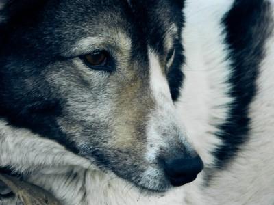 Домашние собаки . Фотограф Екатерина Пастухова