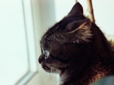 «Горькие» рецепторы защищаю кота. Фотограф Екатерина Пастухова