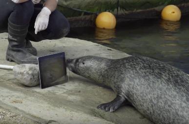 Технологии связывают влюбленных животных