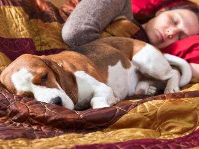 Спать с животными  нельзя