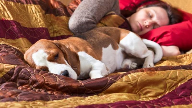 Почему нельзя спать с собакой