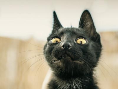 Кошки боятся огурцов