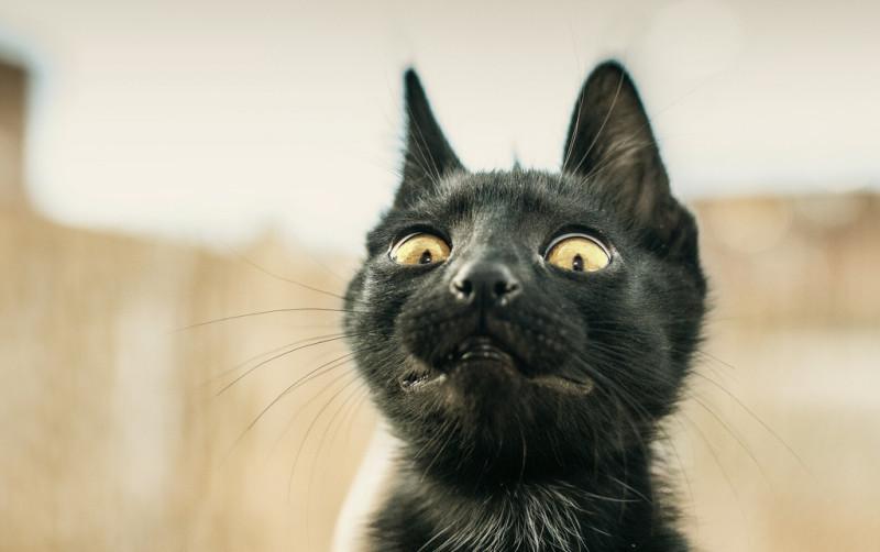 Почему кошки боятся огурцов