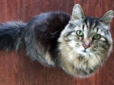 Старейший кот на свете —  Вельвет
