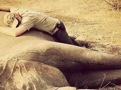 Принц Гарри и слон, спасенный из капкана