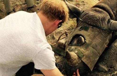 Принц Гарри спасает животных Африки