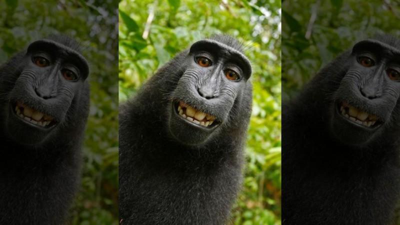 У обезьян больше нет прав