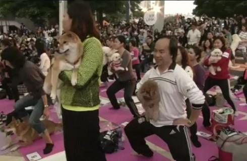 Собаки помогли установить йога-рекорд