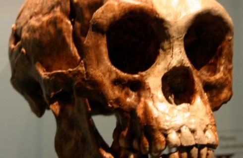 Индонезия – это древняя родина хоббитов