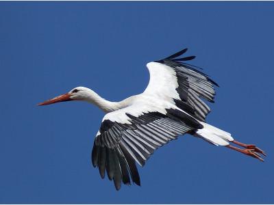 Вред мигрирующим птицам наносит человек