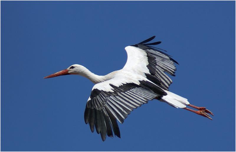 Люди оказывают негативное влияние на мигрирующих птиц