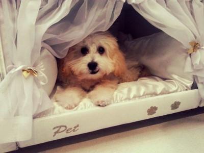 Кровать для собаки Colchao Inteligente Postural
