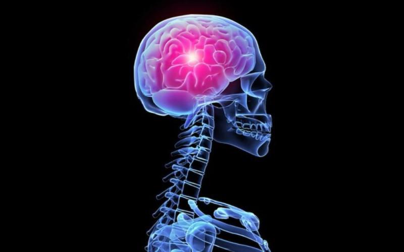 Исследователи нашли в мозге человека механизм отключения удовольствия