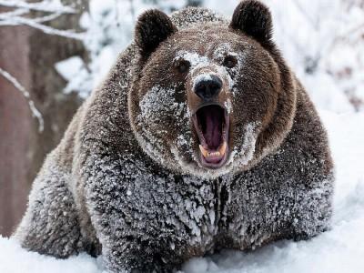 Метаболизм медведей тщательно изучен