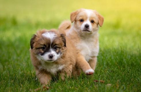 Собаки нужны в каждом офисе