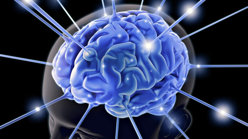 Мозг удаляет старую информацию, освобождая место для новой