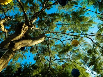 Дыхание деревьев. Фотограф Екатерина Пастухова
