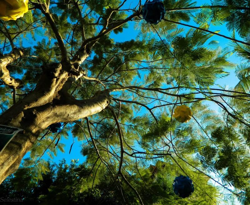 Деревья приспосабливаются к глобальному потеплению