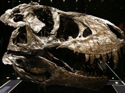 Динозавры вымерли до астероида