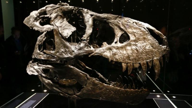 Динозавры не боялись астероида